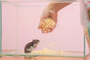 Een hamsterkooi verschonen: 8 tips