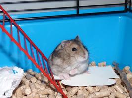 Hamsterkooi inrichten: 4 tips