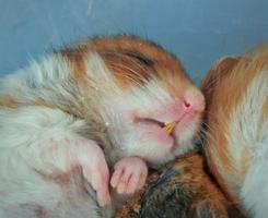 Is een winterslaap schadelijk voor mijn hamster