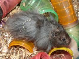 Zelf hamster speeltjes maken: 4 leuke ideeën