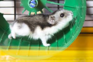 Zo kun je zelf een hamsterkooi maken